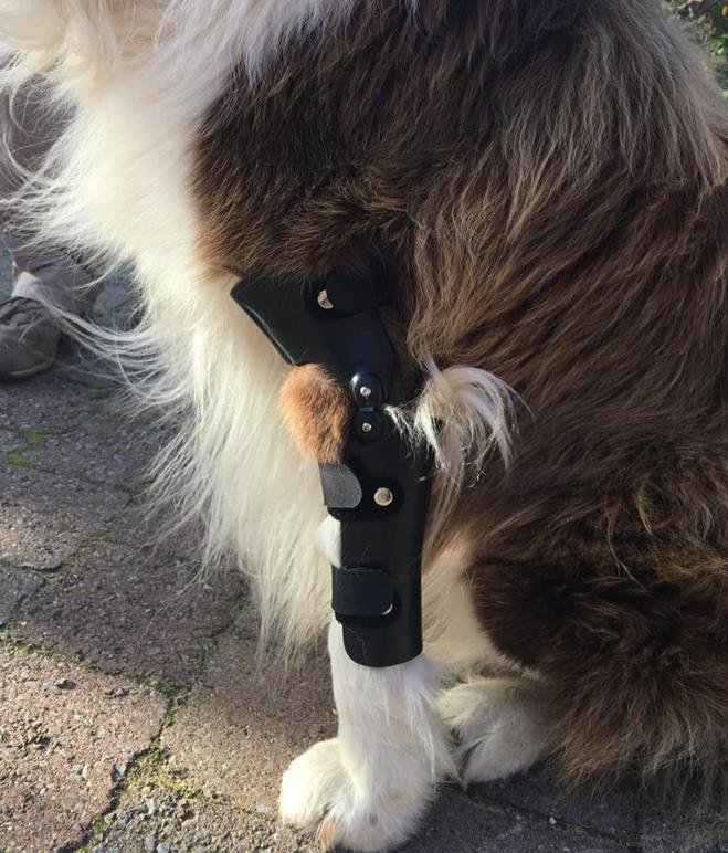 Elleboogbrace voor hond