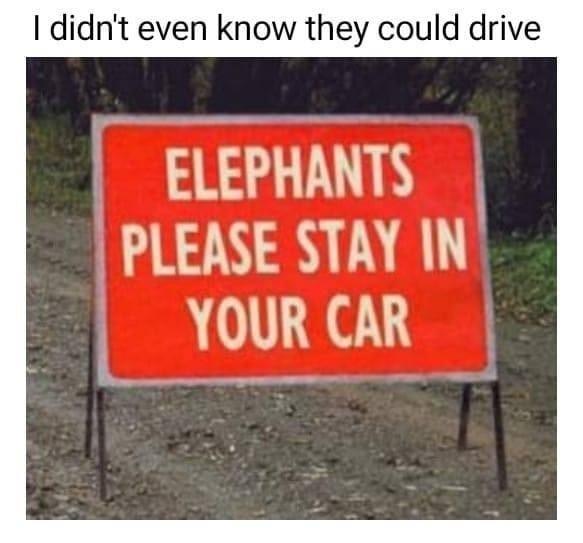 Elephants please stay in car sign