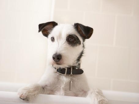 Donner un bain à votre chien?