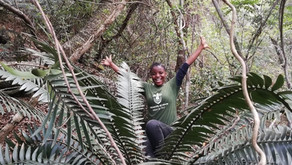 Poaching of endangered cycad, Limpopo province, South Africa