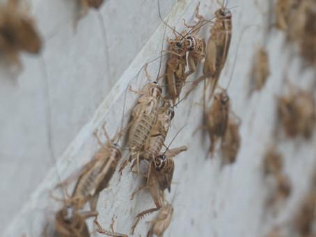 """ฝึกอบรมถ่ายทอดความรู้ผลงานวิจัยสู่การใช้ประโยชน์ของชุมชน """"เรื่องแมลง"""" รุ่นที่ 1"""