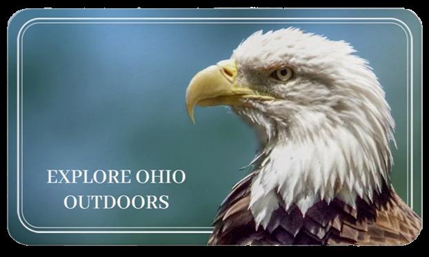 Explore Ohio Outdoors Bald Eagle Photo
