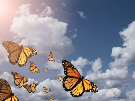 La nature du changement...