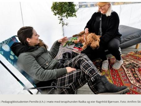 Terapihunder muntrer opp studenter ved Høgskolen i Innlandet!