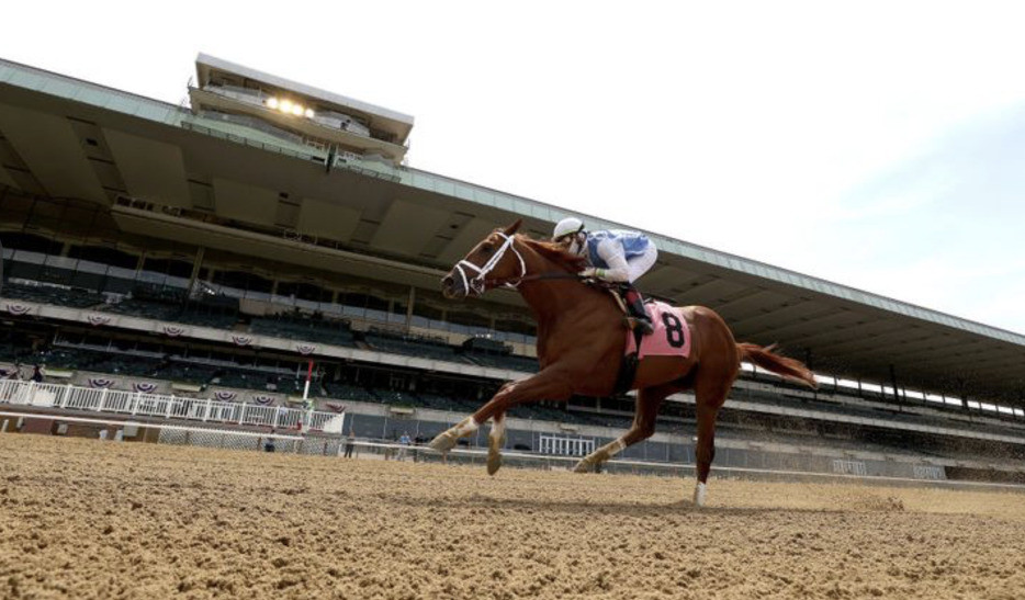 Tiz the Law won the 2020 Belmont Stakes in a crowdless race