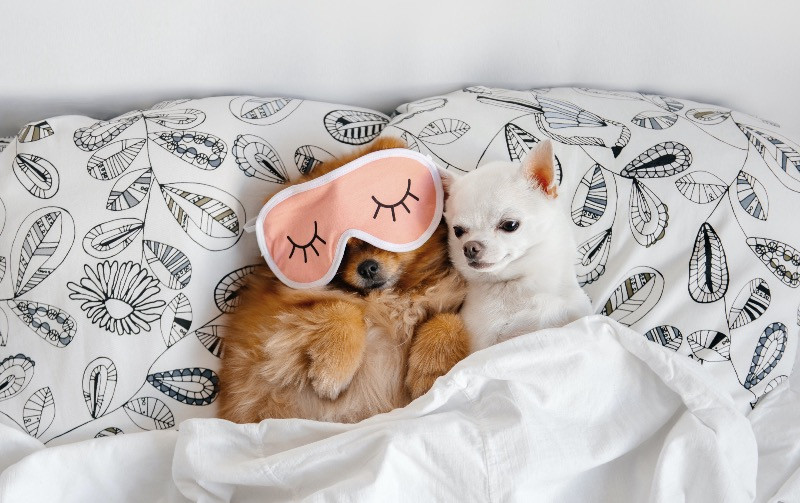 Dogs relaxing on holiday in a bed with eye mask