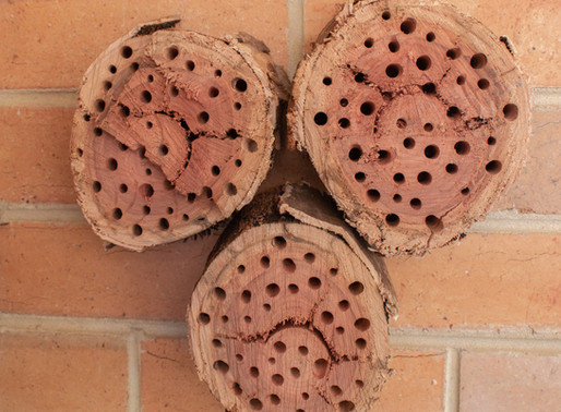 DIY Native Bee/Insect Hotel