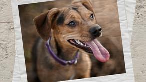 Projeto cria portal único para localizar animais de estimação ou aptos para adoção