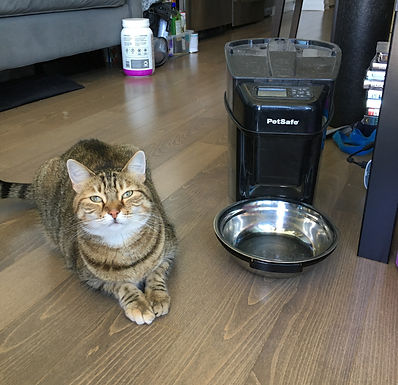 Indi's Reviews: PetSafe Automatic Feeder