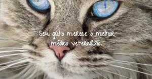 5 dicas para escolher o veterinário do seu gato - catnip catup