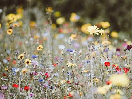 How to Re-Wild your Garden and Improve Biodiversity