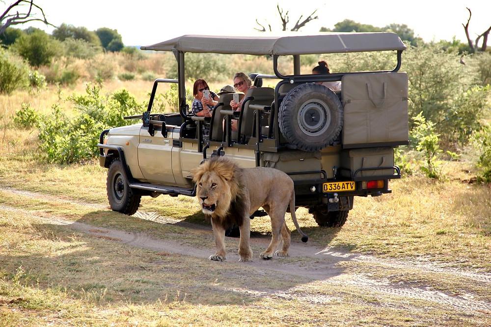 Botswana Savuti Elephant