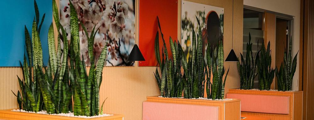 Innenbegrünung, Pflanzenservice, Zimmerpflanzen, Pflanzen, Pflanzenpflege, Raumbegrünung, Pflegeleicht, Bürobegrünung, Mietpflanzen, DreamPlant