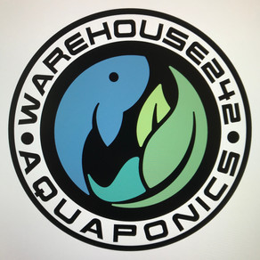 Food Justice + Aquaponics