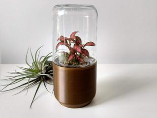 Como as plantas sobrevivem dentro dos terrários?