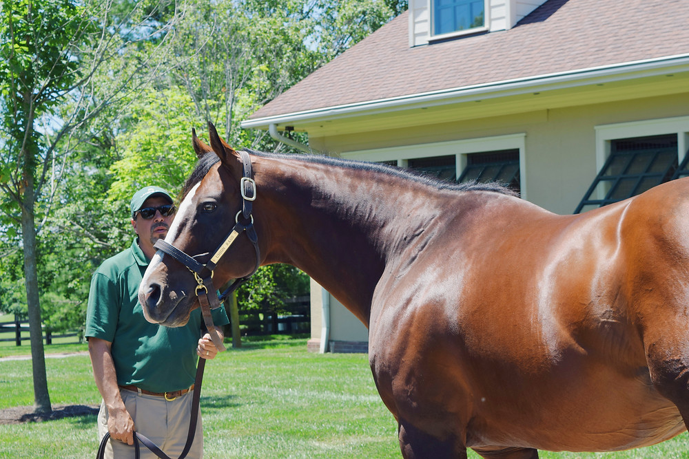 Union Rags, 2012 Belmont Stakes winner, at Lane's End Farm. Visit Horse Country tour 2019.