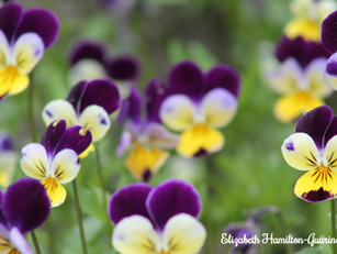 Life With the Zoom Lens On - Let's Focus on the Beauty Around Us
