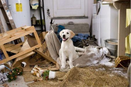 Understanding the Top 5 Bad Behaviors in Dogs - Petdiary Dog Training Collars