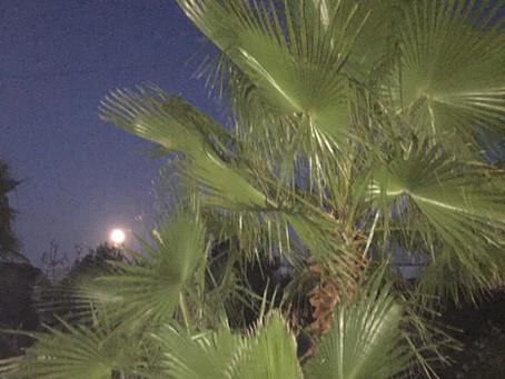 Luna piena: Vollmond unter Palmen