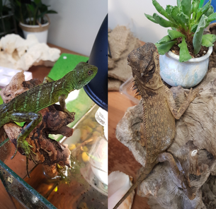 Our New Office Pets, Archie and Sven