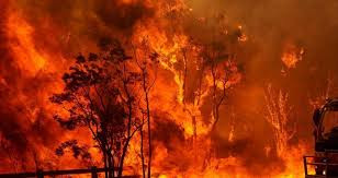 A Response to the Bushfires