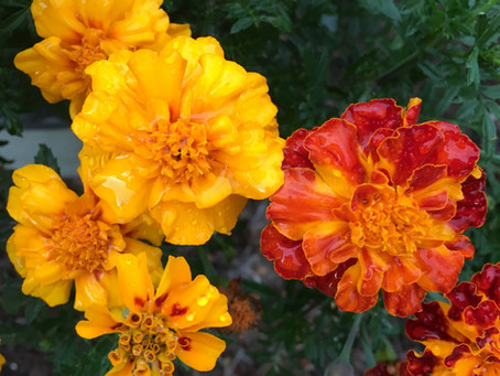The Seedy Gardener:  April Thanksgiving