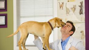 Diabetes: segurança na aplicação de insulina em pets