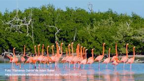 The natural reserve of Rio Lagartos