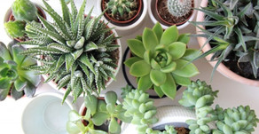 5 Reasons to Beautify Your Home With Plants