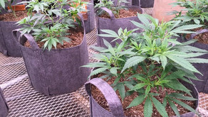 Crazy Cannabis Laws Around the World