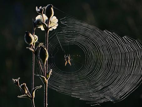 Web of Lies!