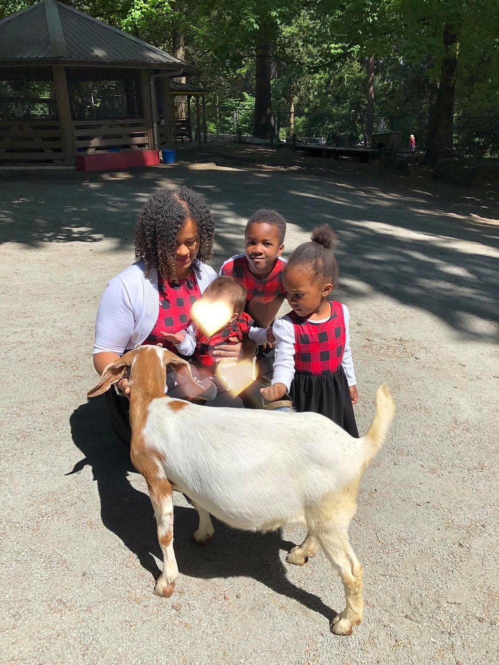 Family in red checkers petting a goat