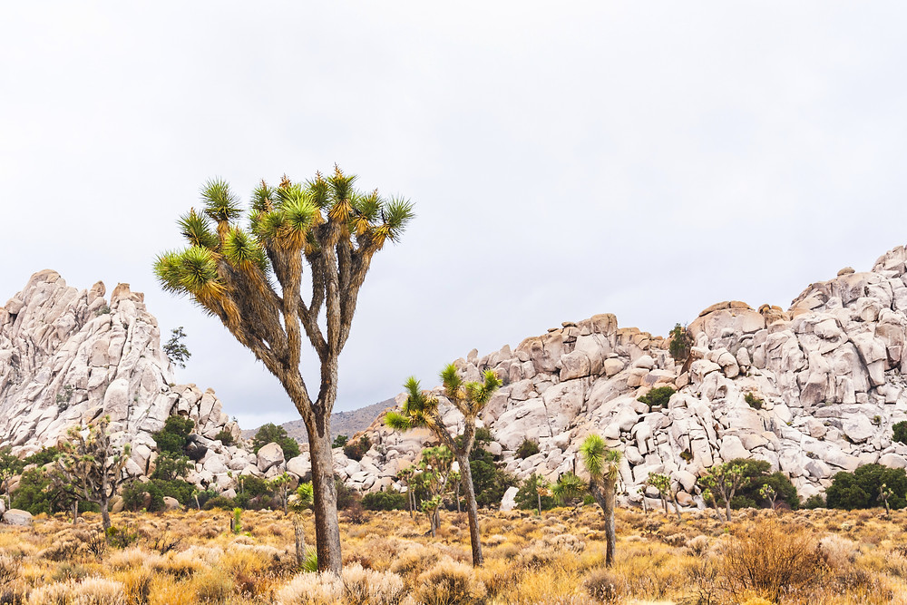 Joshua tree national park landscape photography