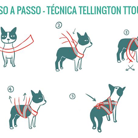Como acalmar seu cão na hora dos fogos de artifício