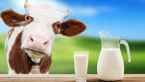 Milk, a health goodie or baddie?