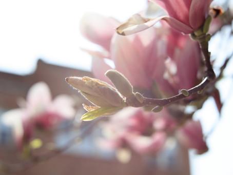 Spring Arrivals