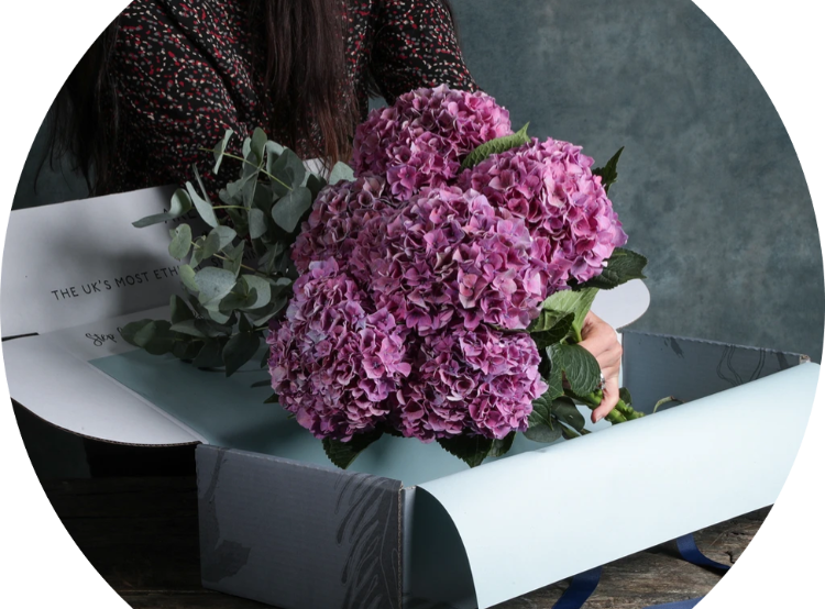 Arena Flowers, The Lifestyle Guide