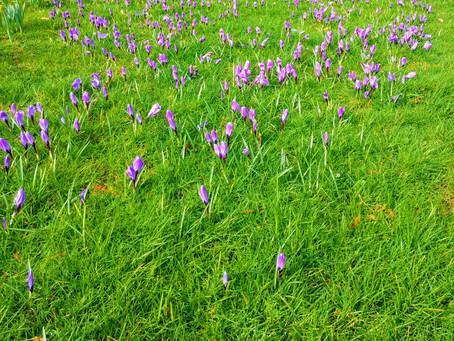 Wild Spring Flowers in Suffolk UK