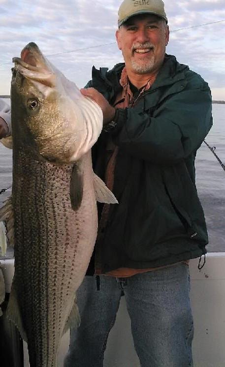 striped bass menhaden management