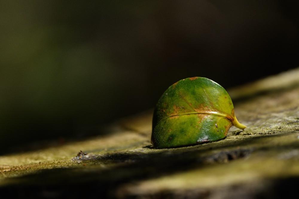 切り株に落ちた日光に照らされる木の葉 / A fallen sunlit leaf on a stump