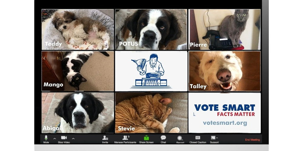 A photo of a nine person video call with cats and dogs in each of the nine frames, with the Vote Smart logo in the bottom right.
