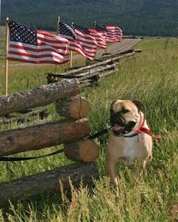 Old English Bulldogge American flags
