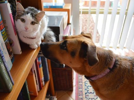 Paszport dla psa i kota