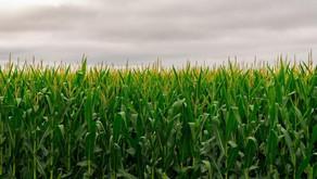 A novel algorithm for enhanced crop productivity