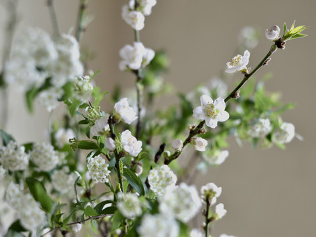 シンプルな花暮らし vol.2 春の白い花木