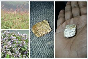 Some flora, fauna and treasure!