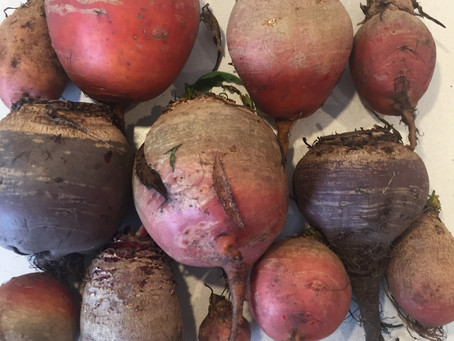 Beetroot glut