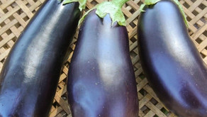 Grilled Greek Eggplant