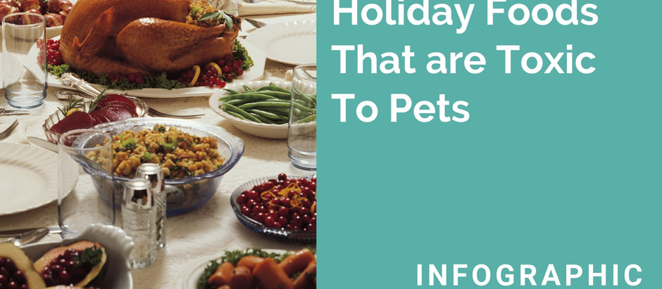 Holiday Foods and Pets Don't Mix