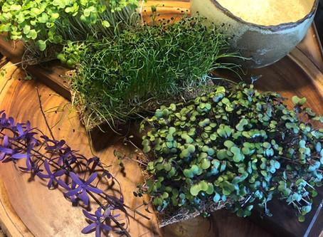 Microverdes - O que dizem os nutricionistas?